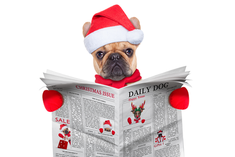 Latest Pet Fashion Headlines – December 2017