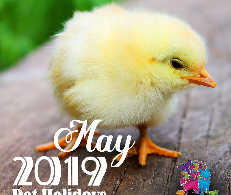 May 2019 Pet Holidays