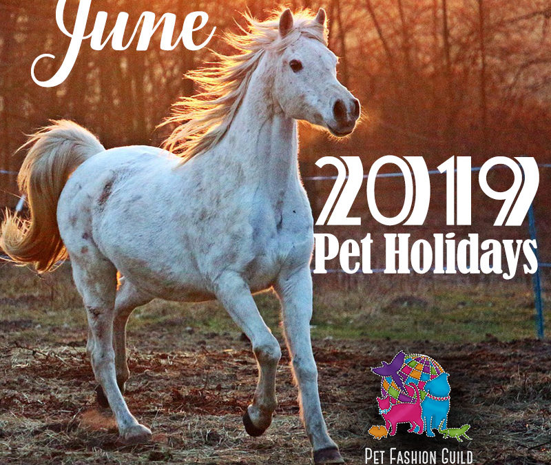 June 2019 Pet Holidays