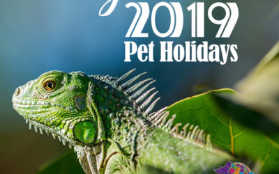 August 2019 Pet Holidays
