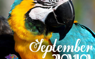 September 2019 Pet Holidays