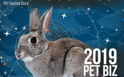 November 2019 Pet Business Astrology Overview