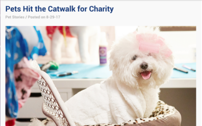 Chewy.com Quotes Laurren Darr on Dog Fashion Show for Charity Article